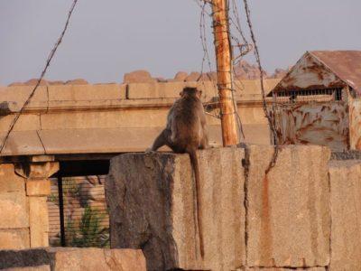 ハンピの猿
