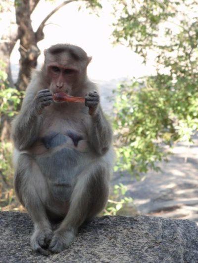 猿 マハーバリプラム