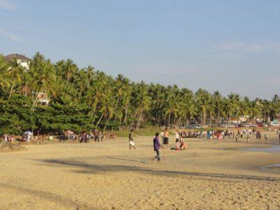 椰子の木 ビーチ