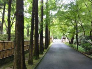 杉並木とモミジ
