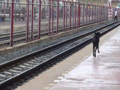 ナコーンラーチャシーマーの犬