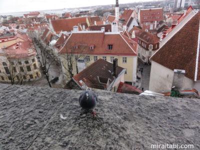 鳩と町並み