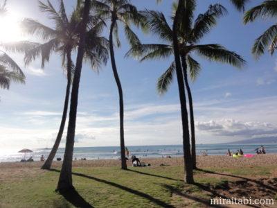 ワイキキビーチとヤシの木