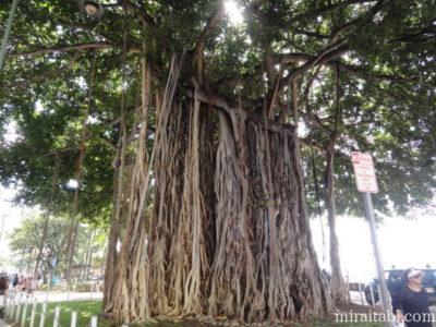 バニアンの大樹
