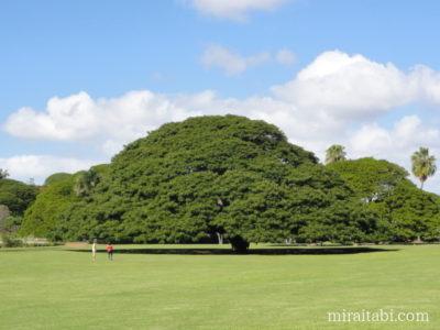 モアナルアガーデンのこの木なんの木気になる木