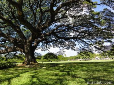 モアナルアガーデンの木