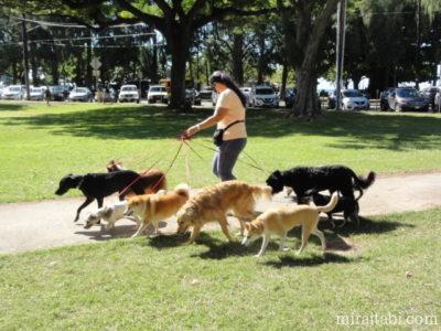 9匹の犬と散歩の女性