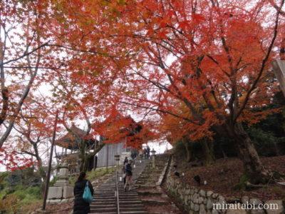 紅葉と階段