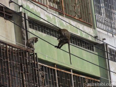 電線に乗っかかってる猿