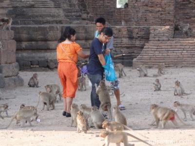 猿に餌やり