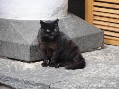 怒っている黒猫